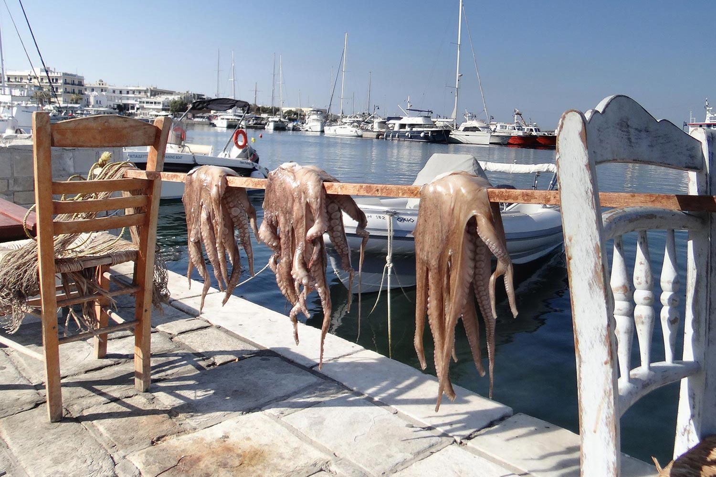 flisvos sport club naxos greece fresh fish naxos greece food dinner lunch breakfast restaurant